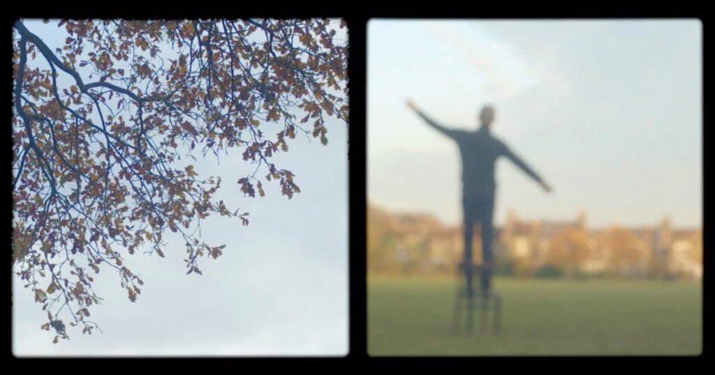 Proximidad: un poema visual meditativo para aquellos que buscan algo que no pueden agarrar, inspirado en los árboles