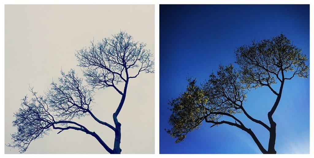 Invernada: resiliencia, la sabiduría de la tristeza y cómo la ciencia de los árboles ilumina el arte de la autorrenovación en tiempos difíciles