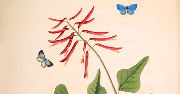 Mariposas raras y polinizadores no cazados: magníficos dibujos del siglo XVIII del primer artista y naturalista en representar la belleza de alas del nuevo mundo