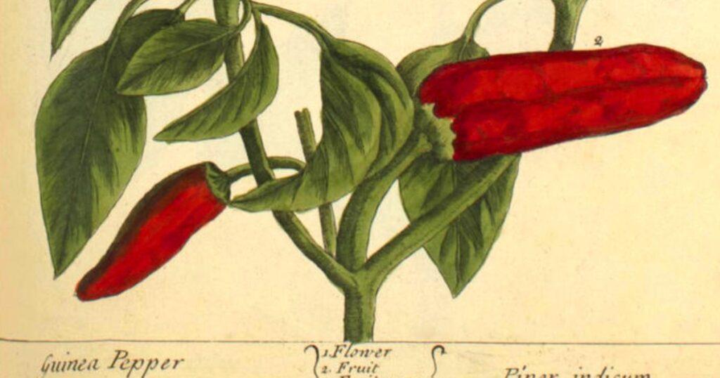 El secreto de la felicidad: Bronson Alcott sobre jardinería y genio