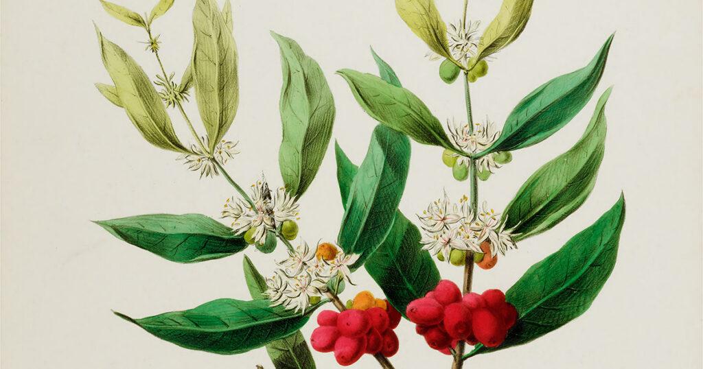 Flores perfectas: aventuras en la botánica no binaria de la naturaleza, con un lado de Emily Dickinson