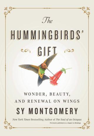 Entre la ciencia y la magia: cómo los colibríes se ciernen al borde de lo posible