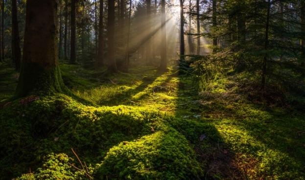 Naturaleza: el don curativo que ignoramos