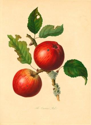 Rastreando las raíces de la Gran Manzana: Los misteriosos orígenes del apodo de la ciudad más famosa del mundo
